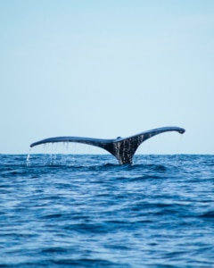 whale-watching-azores-blog