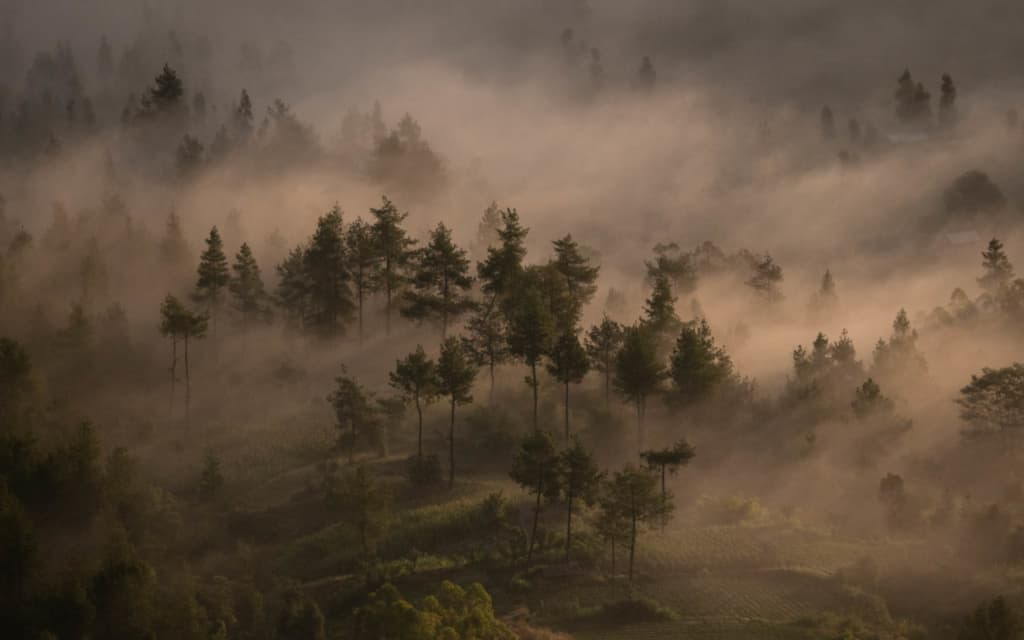 Mount-Batur-sunrise-forest-lightrays