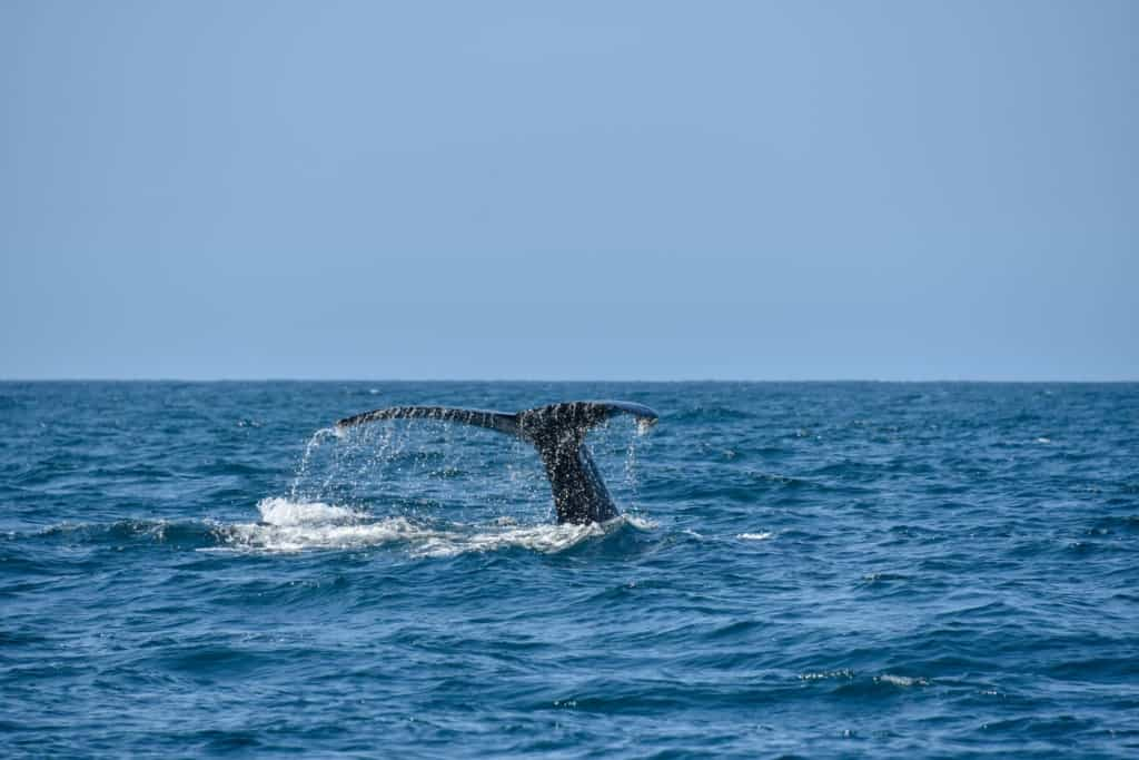 trincomalee-whale-watching