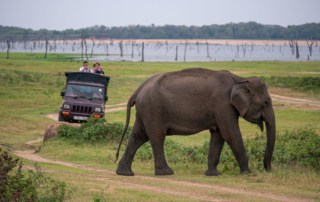 minneriya-national-park-safari-elephant