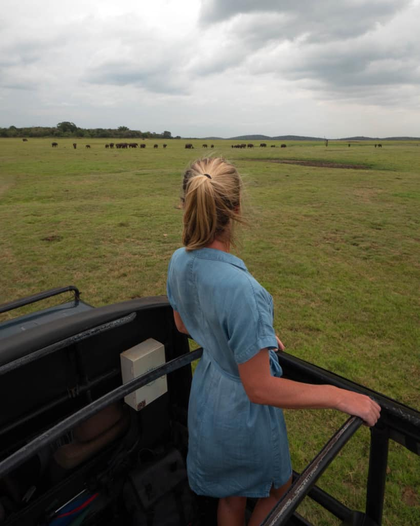 safari-jeep-wild-elephants